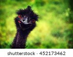 Close Up Of Head Of Ostrich ...