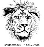 lion with little mane | Shutterstock .eps vector #452173936