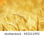 fields of wheat at the end of... | Shutterstock . vector #452211592