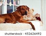 rhodesian ridgeback mother on a ... | Shutterstock . vector #452626492