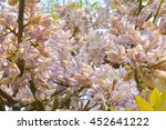 the flowers of wild wisteria ... | Shutterstock . vector #452641222