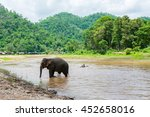 elephant in protected nature...   Shutterstock . vector #452658016