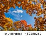 Beautiful Autumn Colorful Tree...