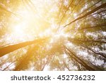 sunshine in forest | Shutterstock . vector #452736232