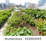 urban farm   growing vegetables ... | Shutterstock . vector #453003445