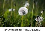 dandelions | Shutterstock . vector #453013282