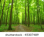 path in  forest | Shutterstock . vector #45307489