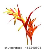 Stock photo bird of paradise flowers isolated on a white background tropical flower 453240976