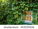 Wooden House Wreathed With Wil...