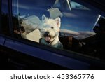 A Super Cute Dog In The Car