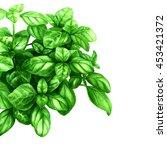 basil leaves  isolated on white.... | Shutterstock . vector #453421372