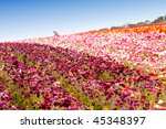 beautiful colorful flowers in... | Shutterstock . vector #45348397