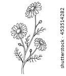 chamomile flower graphic art... | Shutterstock .eps vector #453514282