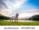 french bulldog under the... | Shutterstock . vector #453589186