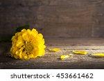 Yellow Zinnia Flower On Old...