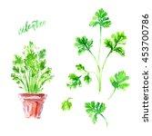 hand drawn watercolor cilantro... | Shutterstock . vector #453700786