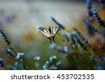 Stock photo butterfly flowers 453702535