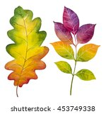 Autumn Watercolor Leaves. Fall...