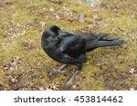a crow | Shutterstock . vector #453814462