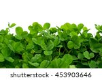 Clover With White Background ...