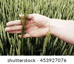 Man Hand Touch Weed In Wheat...
