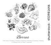 vector hand sketched set of... | Shutterstock .eps vector #453981646