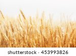 rye on a white background....   Shutterstock . vector #453993826