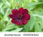 cosmos atrosanguineus ...   Shutterstock . vector #454056562