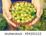 Juicy Berries Of A Gooseberry...