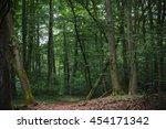 forest in frankfurt main ... | Shutterstock . vector #454171342