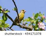 greenfinch | Shutterstock . vector #454171378