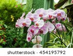 orchids orchids purple  orchids ... | Shutterstock . vector #454195792