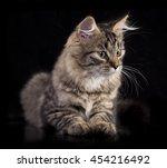 kitten | Shutterstock . vector #454216492