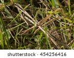 texture of green grass  clover  ... | Shutterstock . vector #454256416