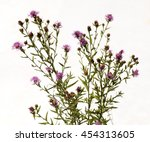 lilac and purple flowers... | Shutterstock . vector #454313605