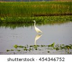 Great Egret  Ardea Alba  In A...