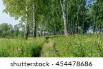 Birch Forest Summer Landscape....