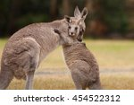 Mother And Baby Kangaroo Hug