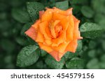 lonely orange rose after the... | Shutterstock . vector #454579156