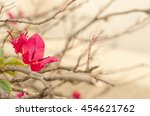 Red Bougainvillea In Evening