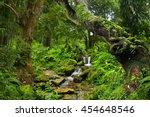 asian jungle   Shutterstock . vector #454648546