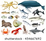 set of different types of sea... | Shutterstock .eps vector #454667692