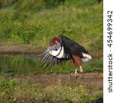 Small photo of African fish eagle flying over river, Botswana
