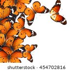 butterflies isolated on white.... | Shutterstock . vector #454702816