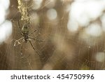 "Small photo of Golden silk spider ""Nephilidae Nephila"" caught a bee"