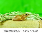 Small photo of Small frog or ranidae on bamboo and rice tree in green background