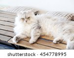 Persian Cat In The White...