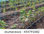 cucumbers in the greenhouse in... | Shutterstock . vector #454791082