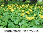 Yellow Lesser Celandine...