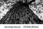close up view in black and...   Shutterstock . vector #454818562